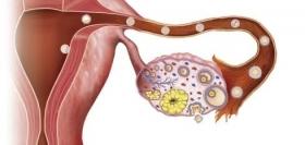 Cycle menstruel ovulation