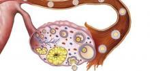 Période avant l'ovulation